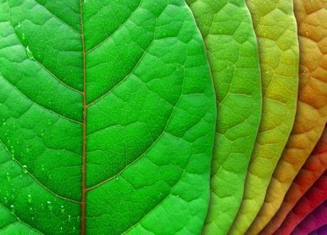 Progetto GJO – Bando percorso idee imprenditoriali green